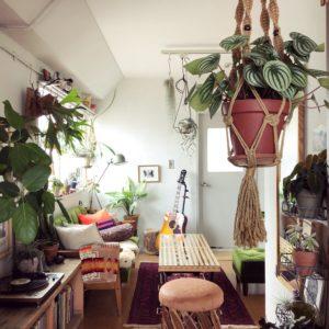 シンボルハンギングにおすすめの植物【ペペロミア・サンデルシー】