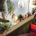 窓際に置くのにおすすめの植物