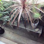 ベランダガーデンに置くならこの植物