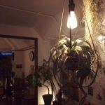 植物の形を活かしたライティング/キセログラフィカ