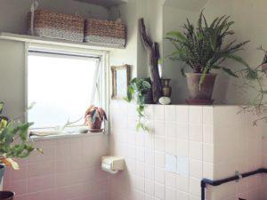 バスルームで育てられる植物