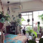 ハンギングにおすすめの植物/リプサリス・ケレウスクラ