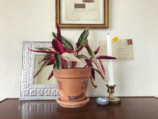 インテリアに映える観葉植物⑨/カラテア・トリオスター