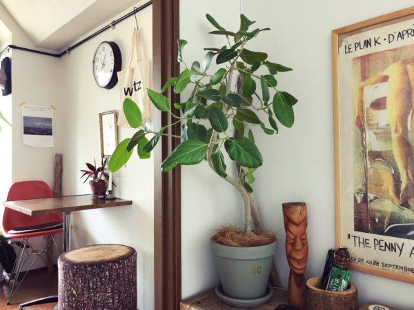 シンボルツリーにおすすめの植物/フィカス・ベンガレンシス