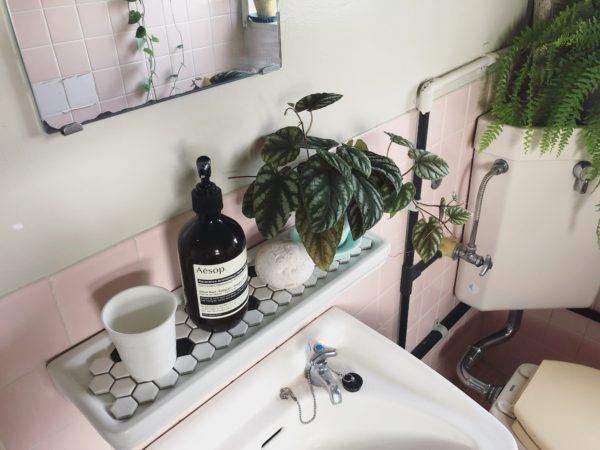 爽やかなバスルームにぴったりの植物/シッサス・ディスカラー