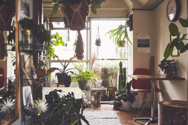 【note】観葉植物を枯らさない方法