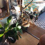 ミラーと植物を使ったウォールデコ