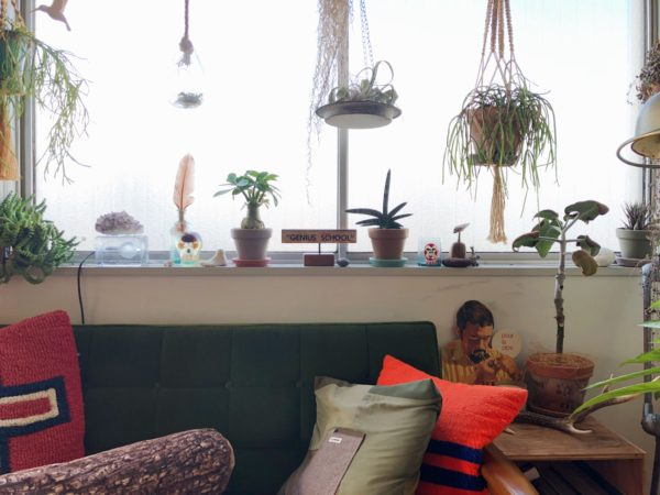 窓際の植物スタイリング/サンスベリア・ボンセレンシス
