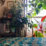 繁り感のある植物スタイリング/モンステラ・セル
