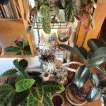 かたまりで配置する植物の飾り方①