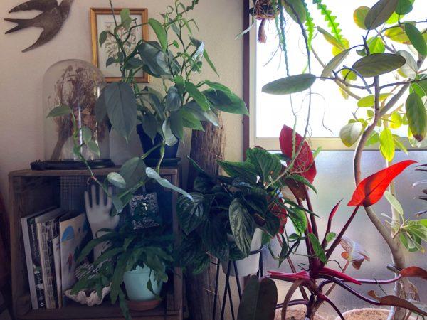 かたまりで配置する植物の飾り方②