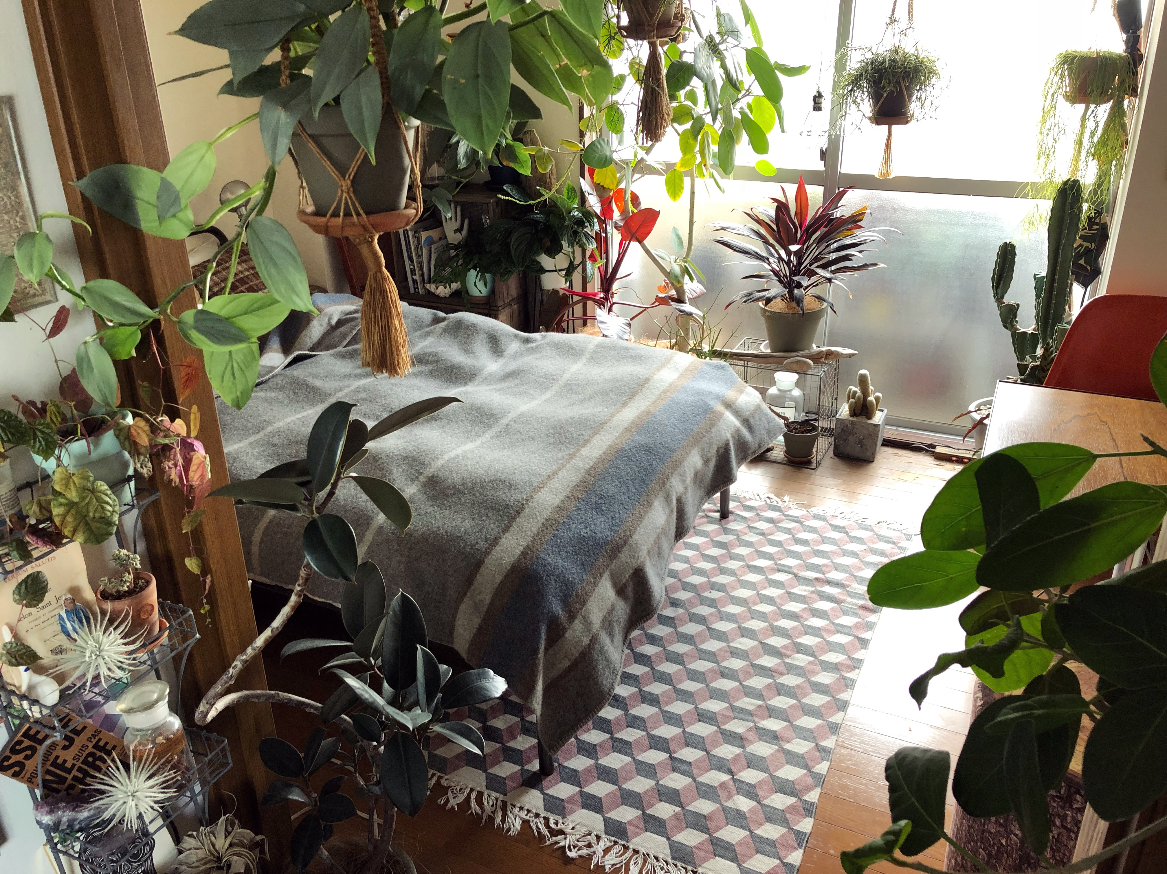 【note】真冬の観葉植物の育て方