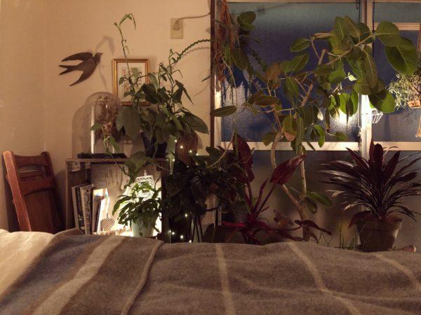 観葉植物と照明の関係③