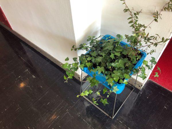 【イケてるショップのイケてる植物⑤】D&DEPARTMENT TOKYO