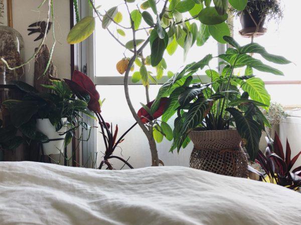 窓際 観葉植物