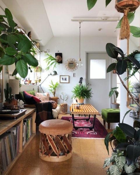 インテリア 植物 ブログ