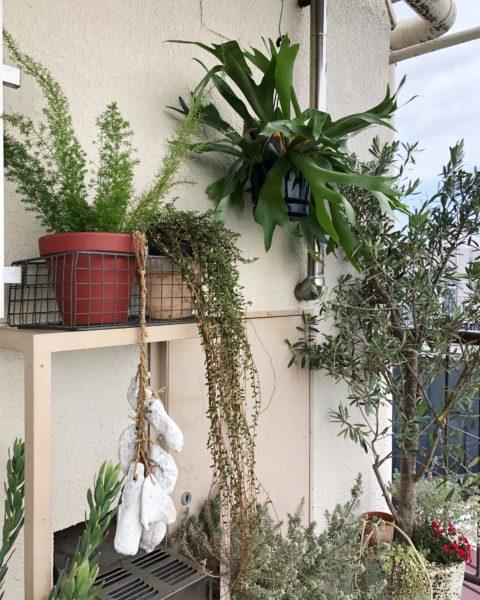 玄関先 植物 ディスプレイ