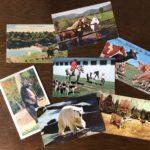 ポストカードをDIGる/@中目黒 COW BOOKS
