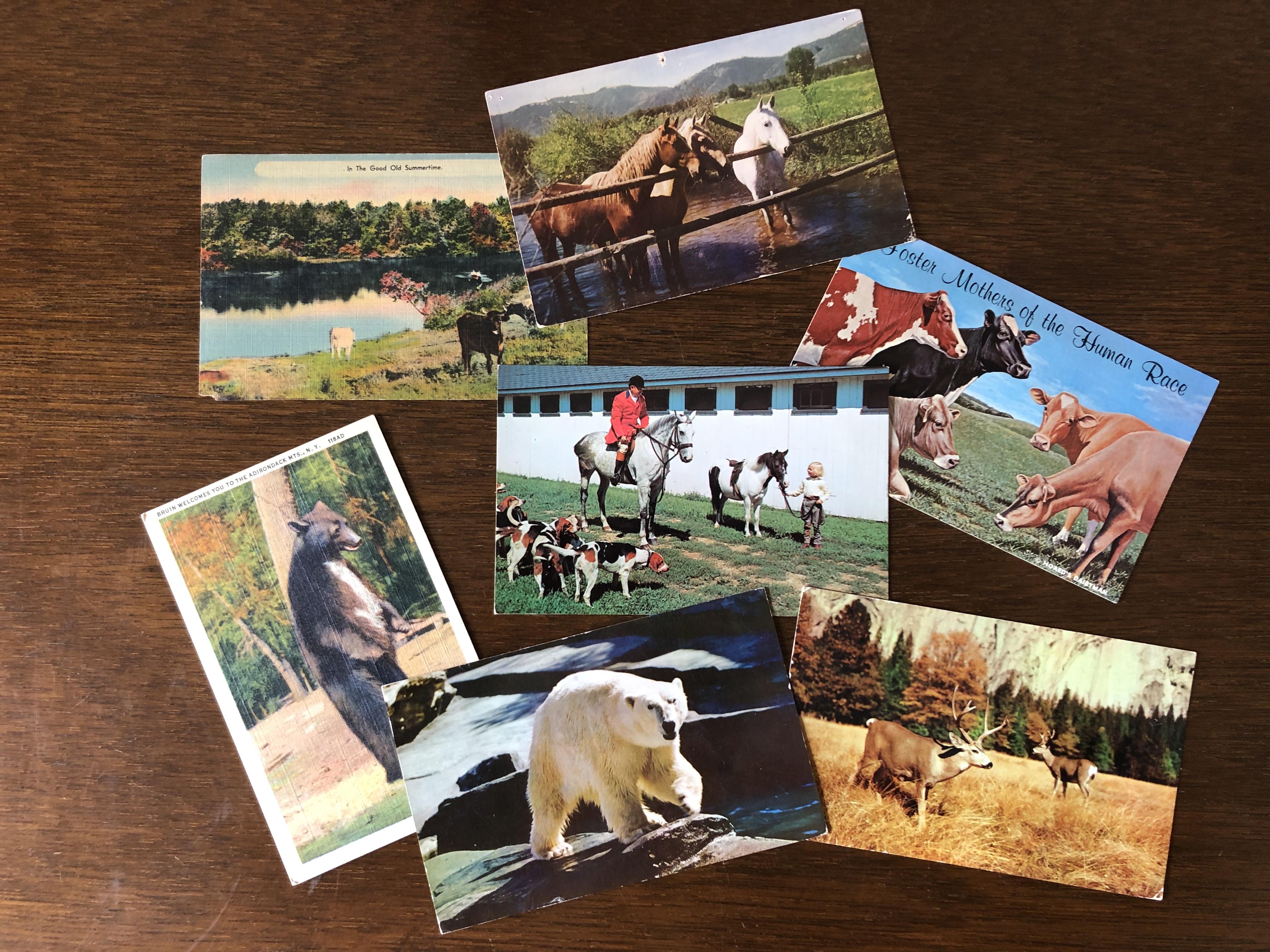COW BOOKS ポストカード