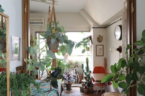 植物で境界をつくる