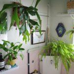 植物とアートを組み合わせたディスプレイ