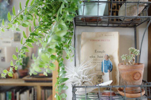 エスキナンサス・ラスタの生長と飾り方