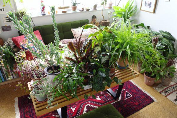 旅行中の植物への水やり対処法