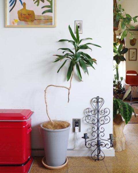 観葉植物 飾り方