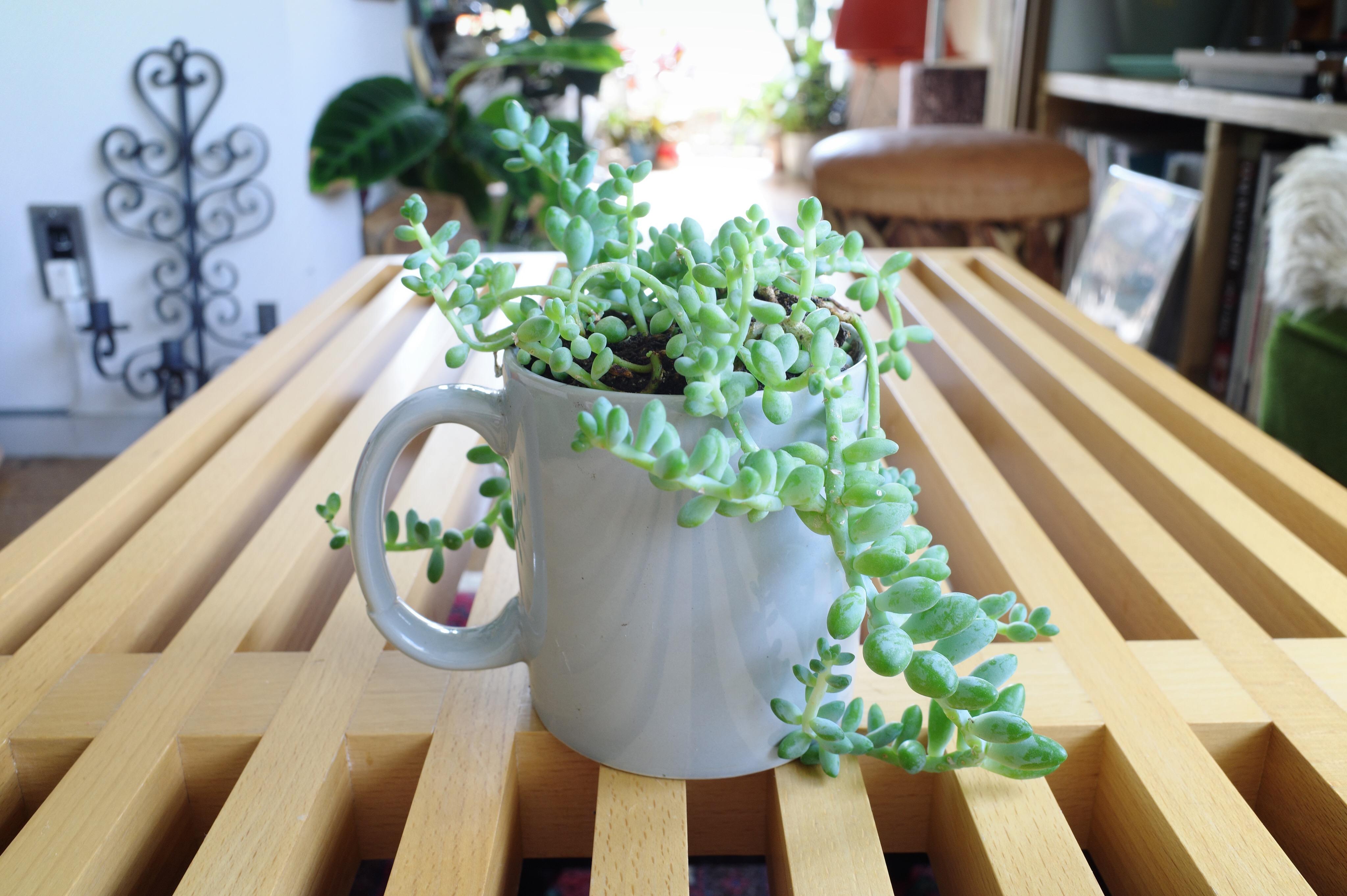 CASICA マグカップ 植物