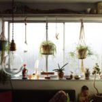 窓際リプサリスの飾り方