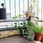 続・ガーデンの雰囲気をアップさせる小物