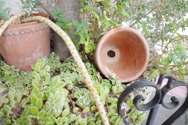 ガーデンの雰囲気をアップさせる小物たちと、寄せ植えのその後