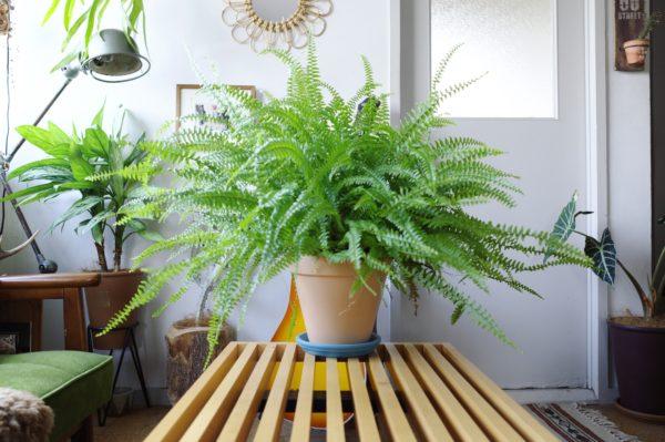 植物 植え替え 必要?