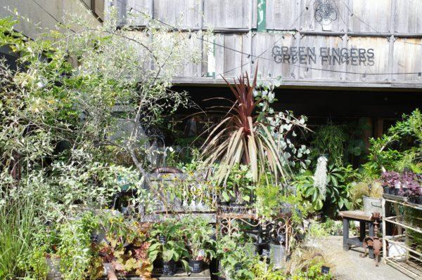 三軒茶屋 GREEN FINGERS