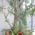 屋外植物の台風対策【風の抵抗を少なくする】