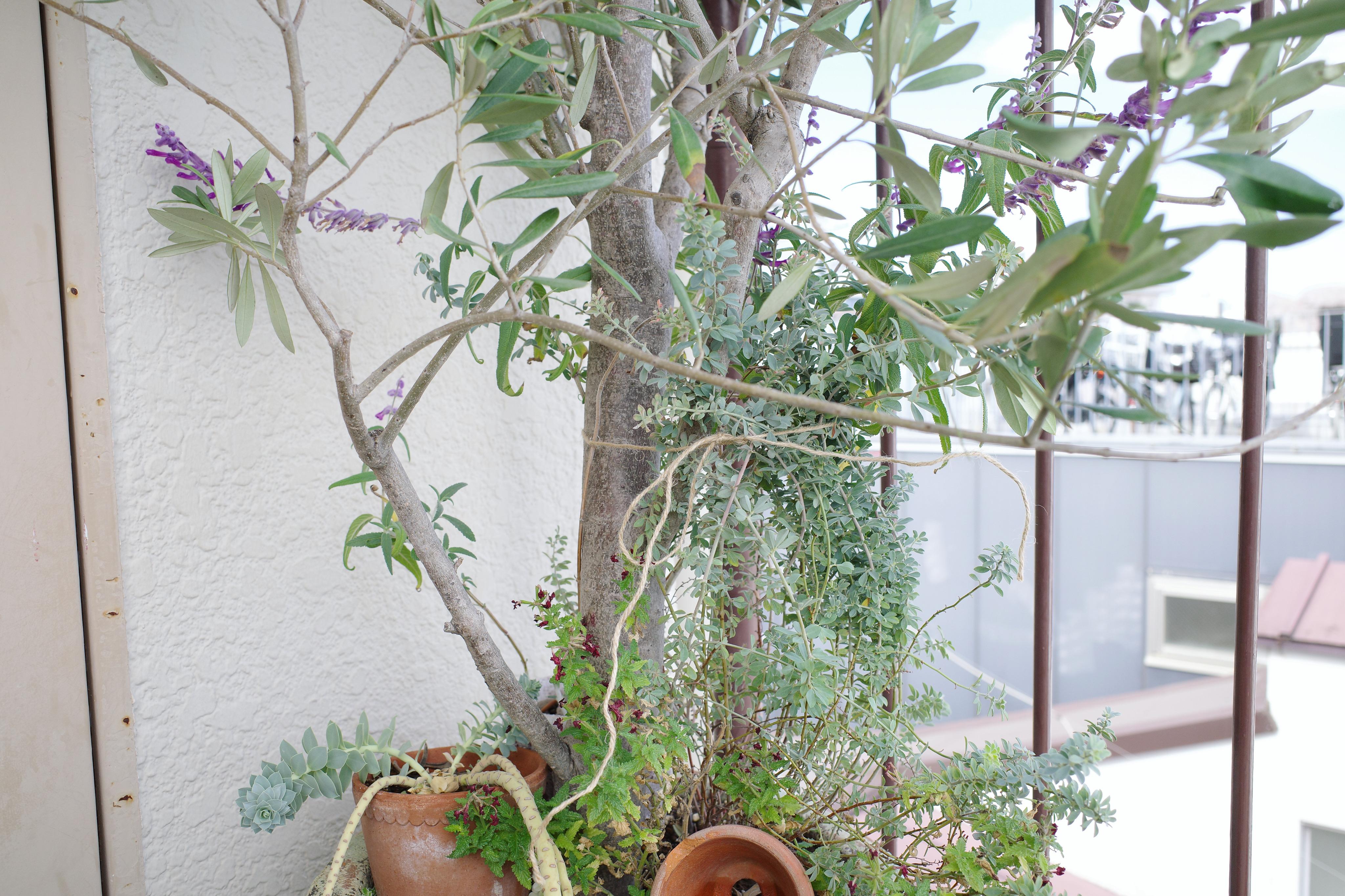 屋外 植物 台風対策