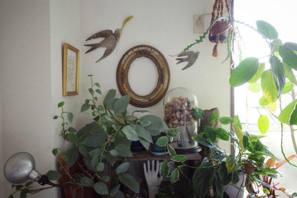 ウォールデコレーション 植物