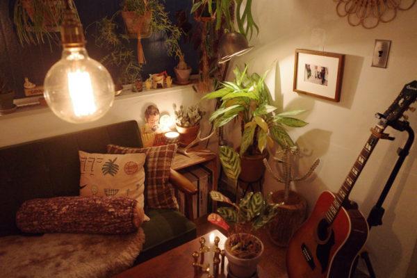 照明は植物に埋もれるように