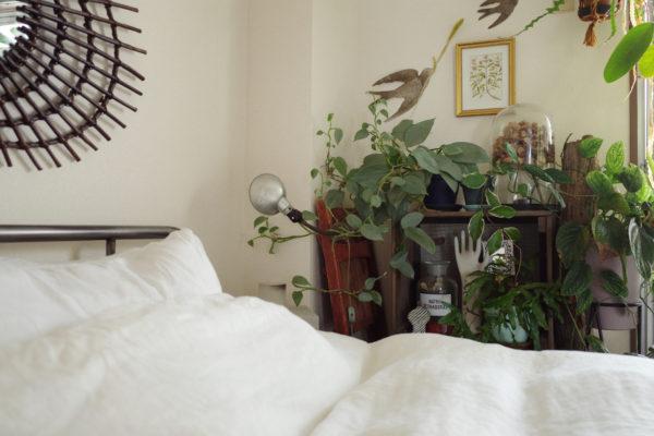日陰に強い植物たち【ベッド脇のディスプレイ】