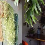 リプサリス・カンポスポルトアナの花