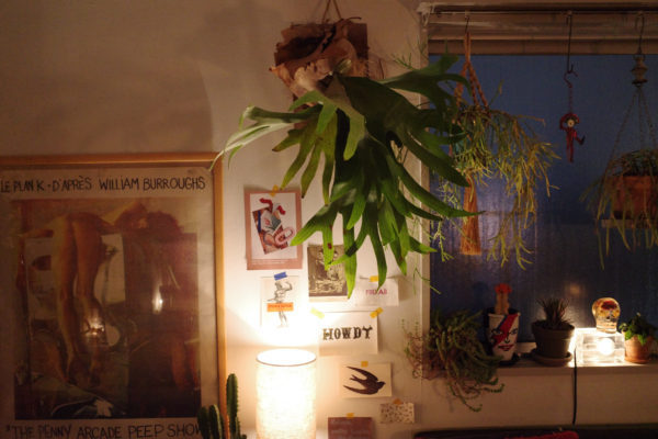 ビカクシダと間接照明の相性