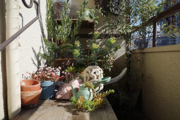 ベランダ 冬越し 植物