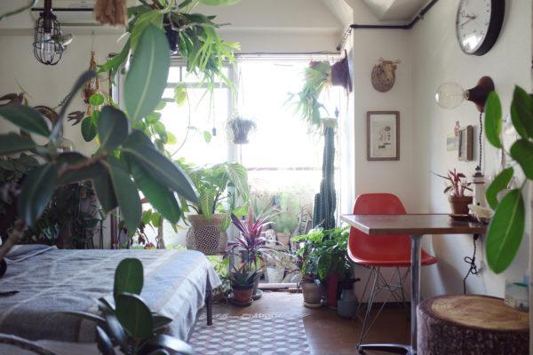 お部屋に映える観葉植物の飾り方【植物でフレームをつくる】