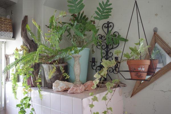 バスルーム 植物