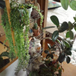 ワイヤーラックに飾るならこんな植物【エスキナンサス・ラスタ】