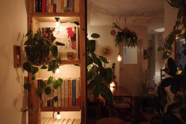 照明の近くには植物を【スキンダプサス】