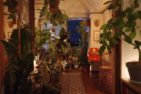 植物でフレームをつくるように【夜編】