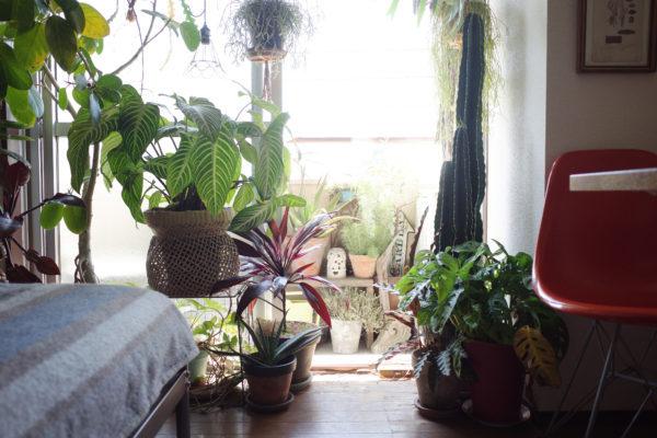 ベランダで冬越しできる植物たち②