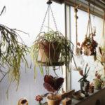 植物 ハンギング 窓際