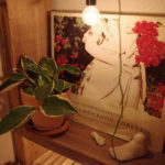 本棚 夜 照明